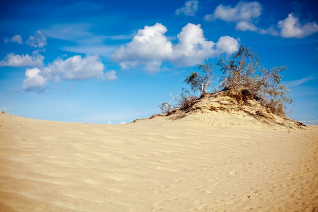 Песок и дерево