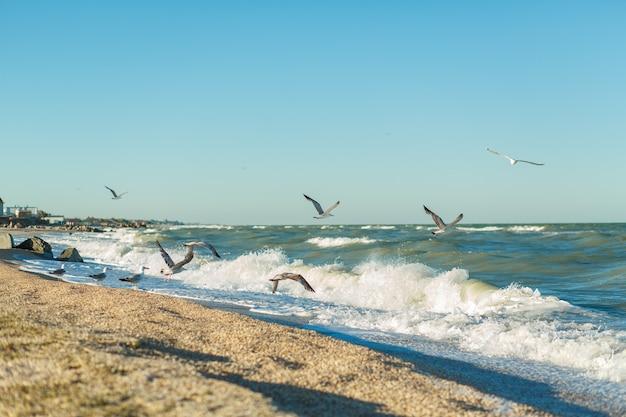 Песчаный пляж на берегу бурного моря