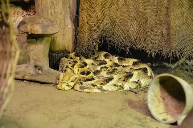 집 근처의 모래색 뱀. 영국.