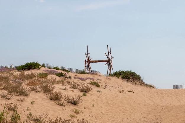 Sand dune vegetation