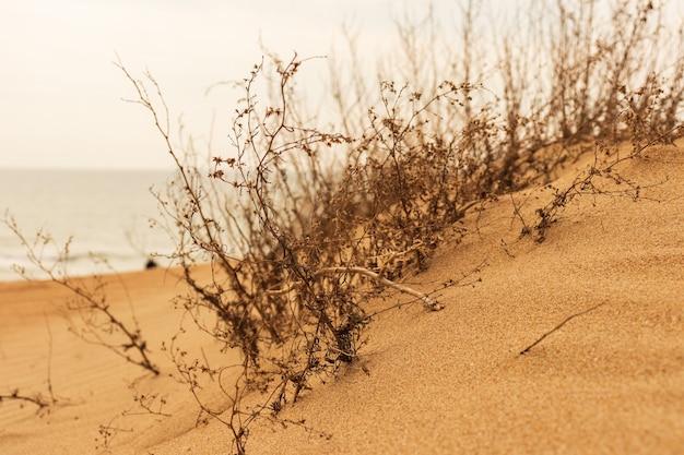 ビーチの夕日の光に対して砂丘