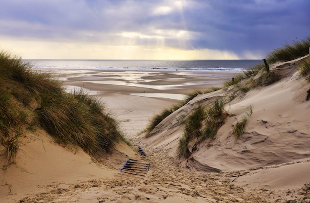 Sand dunes in amrum, germany in front of the beach