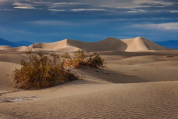 네바다 사막에서 모래 언덕