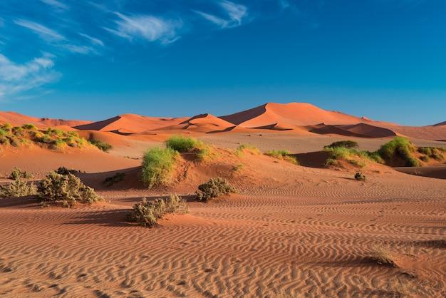 Sand dunes in the namib desert at dawn, roadtrip in the wonderful namib naukluft national park, travel destination in namibia.