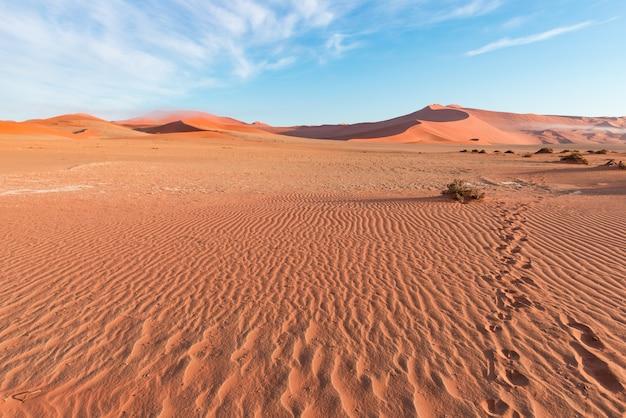 Sand dunes in the namib desert at dawn, roadtrip in the wonderful namib naukluft national park, travel destination.