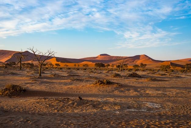 Sand dunes namib desert namib naukluft national park, travel destination in namibia, africa.