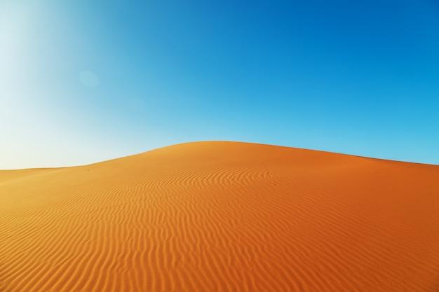 サハラ砂漠の砂丘。