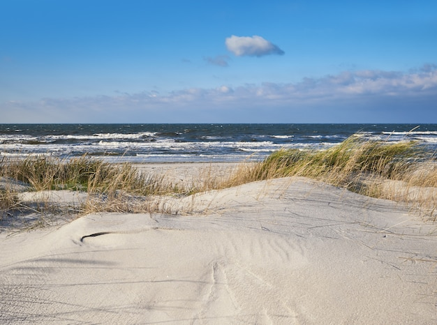 Sand dunes with grass and shrubs protecting beach from the storms in hiddensee island