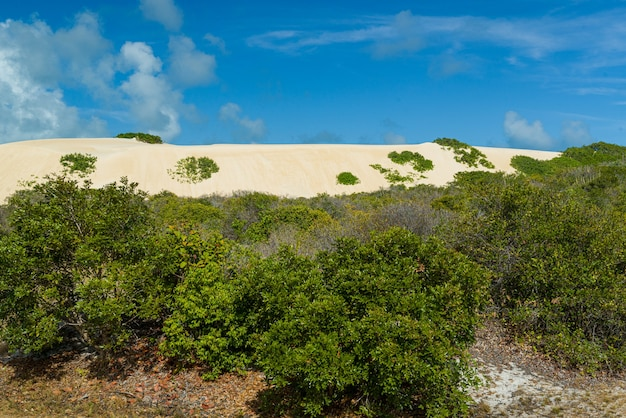 2015年11月22日にマキサラングアペリオグランデドノルテブラジルの在来植物と砂丘
