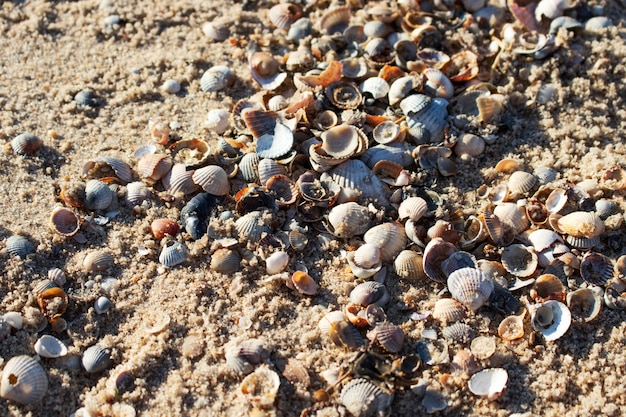 Sand and seashells. sandy surface.