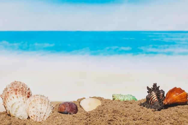 Песок с разнообразием ракушек