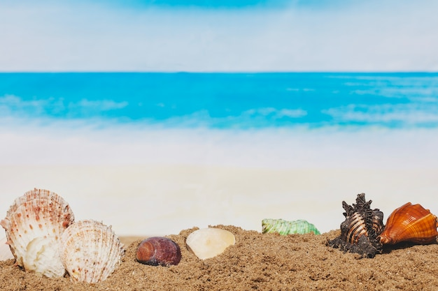 Sand with variety of seashells