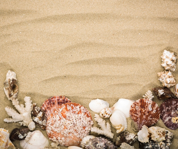 Sandy background with decorative seashells