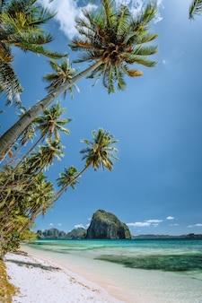 Sandy beach and palm trees on tropical island. el nido, palawan, philippines.