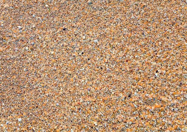 샌디-파손 조가비 젖은 바다 배경 프리미엄 사진