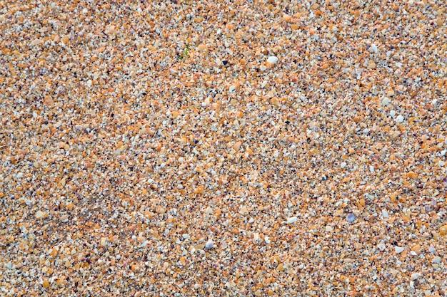 샌디-파손 조가비 젖은 바다 배경