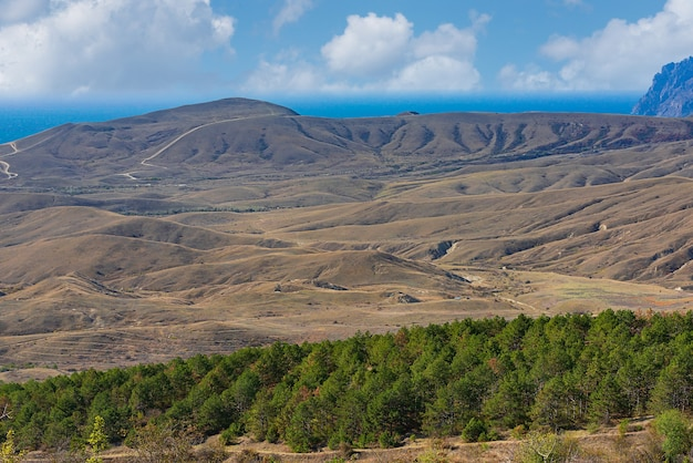 Sandy and loamy hills with stands of forest strips on the seashore