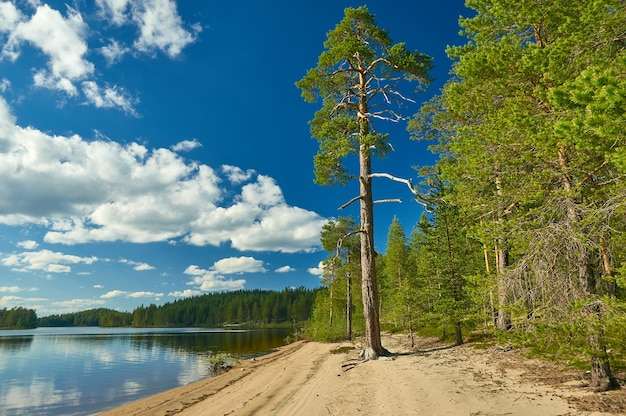 Песчаный берег озера хайкола, республика карелия, россия.