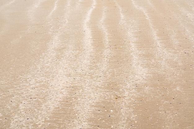小さな貝殻のある砂浜