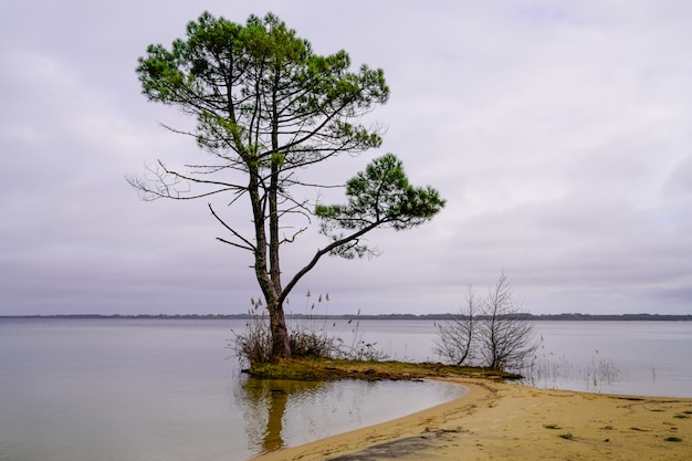Sanguinet area landes sand lake beach with pines reflection in water france
