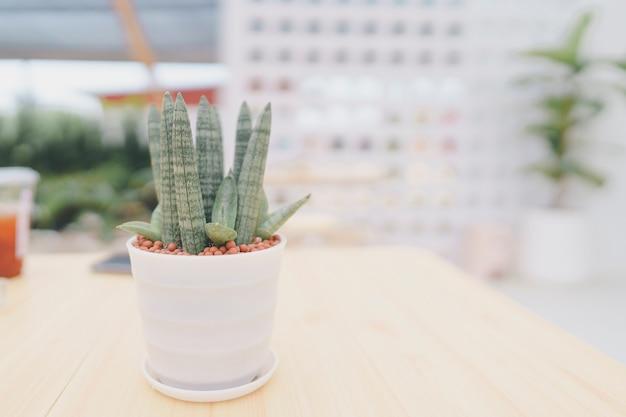 공기를 정화하기 위해 나무 탁자 위에 놓인 작은 흰색 화분에 든 산세베리아 실린더리카