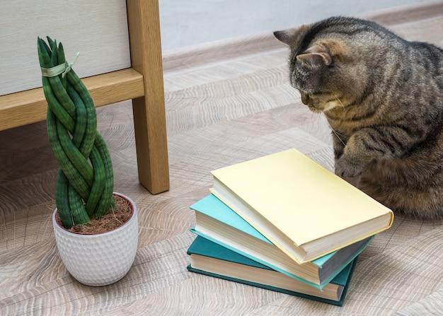 Сансевиерия имеет цилиндрическую форму в форме косички, книги и кошки.