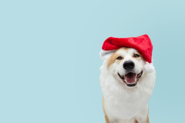 Костюм собаки санта-клауса празднует рождество.