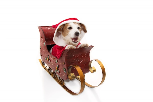 Santa claus dog costume inside a sleigh at christmas