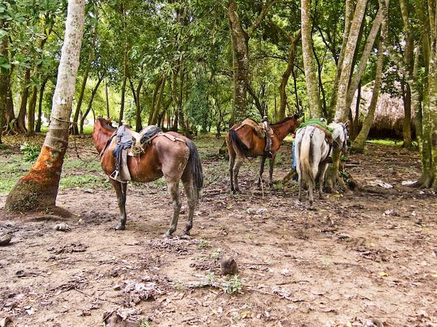 Santa marta colombia natural park