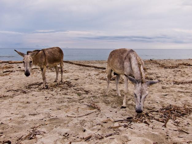 Santa marta donkey beach natural park