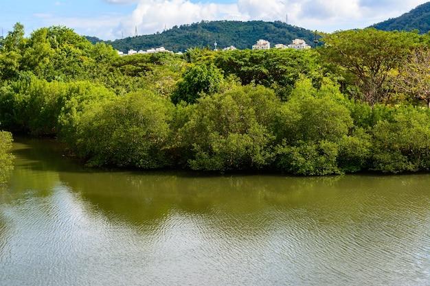 싼야, 중국 - 2020년 1월 19일: 싼야 시의 유명한 열대 바이 루 공 위안 공원의 아름다운 연못, 나무, 초목. 중국 하이난 섬.
