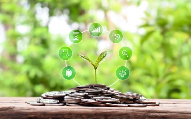 Саженец растет на куче монет и концепции экономии денег значок роста финансов бизнеса