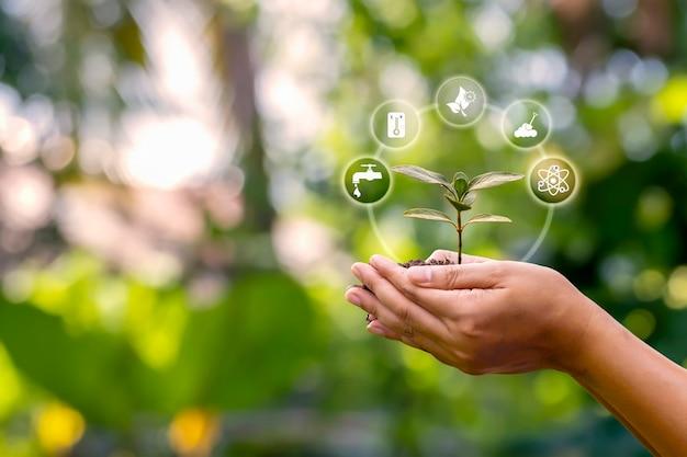 Саженец, растущий на почве в руках фермеров и значок фактора роста растений