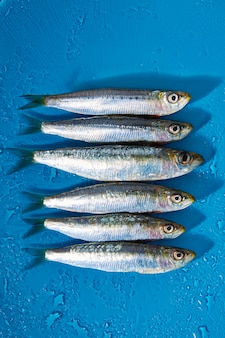 Sardine fishes in a row on blue wet background