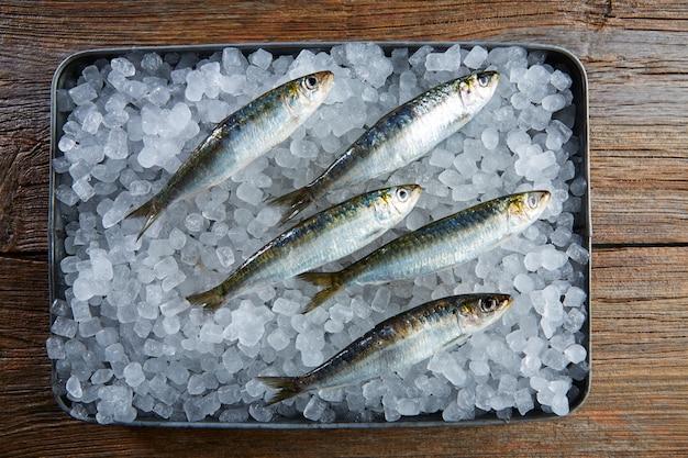 Sardines fresh fishes on ice