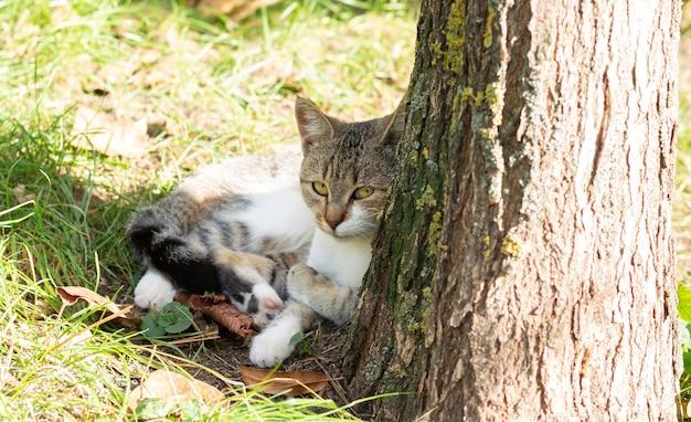 満足している猫は木の隣の草の上に横たわってカメラを見て