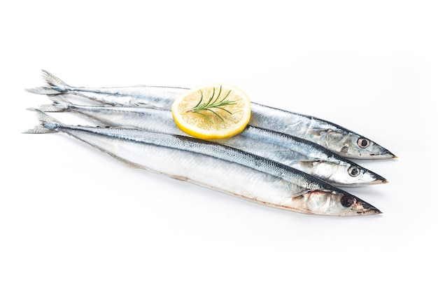 Saury fish