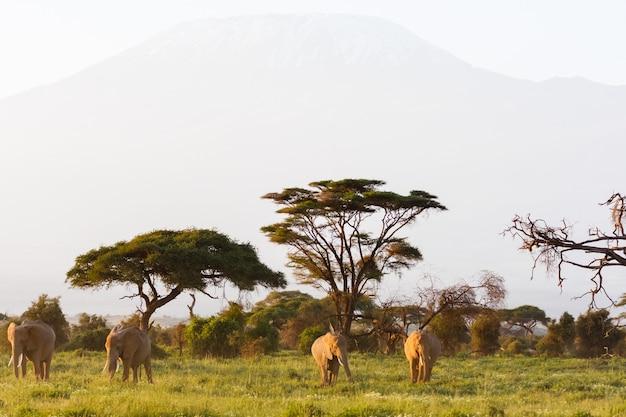 Саванна амбосели в кении с животными