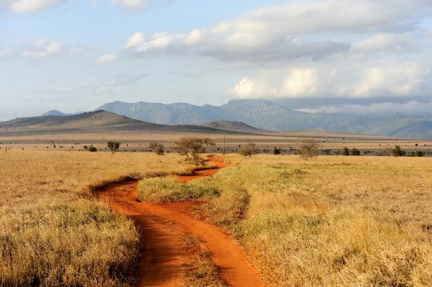 アフリカ、ケニアの国立公園のサバンナの風景