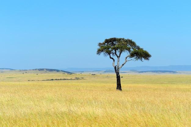 ケニアの国立公園のサバンナの風景
