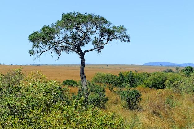 Пейзаж саванны в национальном парке кении