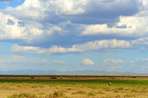 Пейзаж саванны в национальном парке в кении