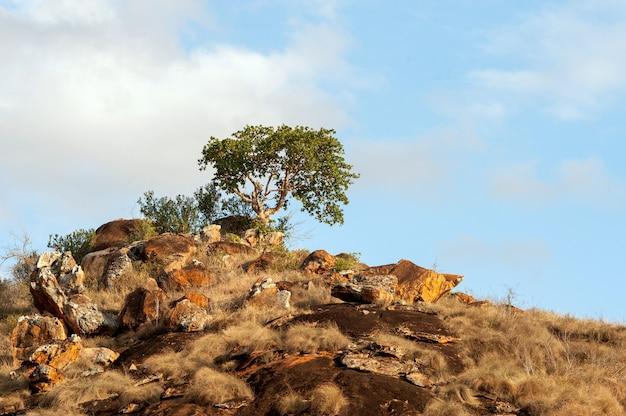 케냐, 아프리카의 국립 공원에서 사바나 풍경
