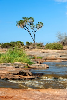 Пейзаж саванны в национальном парке кении, африка