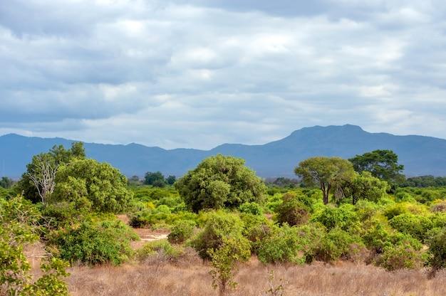 Пейзаж саванны в национальном парке кении, африка Premium Фотографии