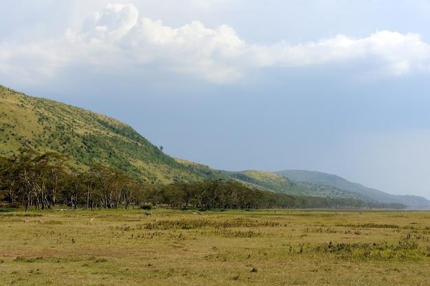 케냐 국립 공원의 사바나 풍경