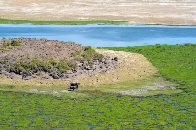 Пейзаж саванны с рекой в национальном парке кении, африка