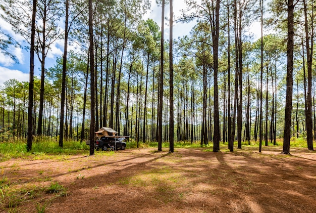 Savannah and pine forest in thung salaeng luang national park, thailand