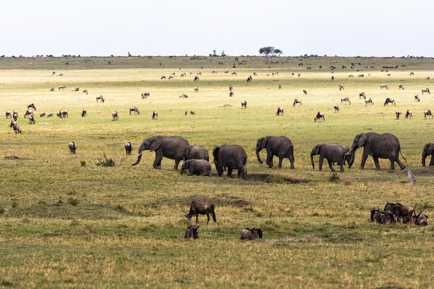 Саванна с большими и маленькими травоядными животными
