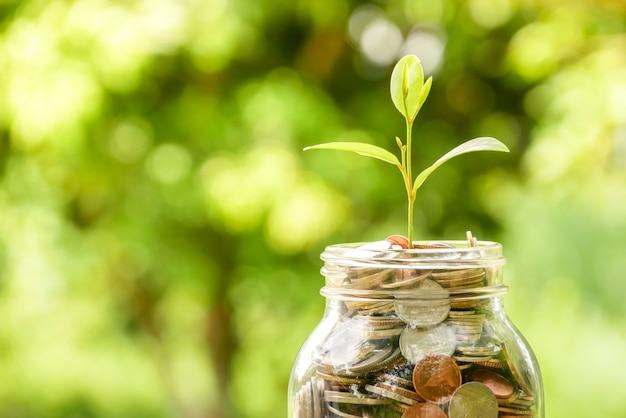 Save money for investment concept. plant growing out of coins
